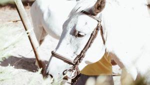 Passeios Equestres